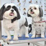 Cosmetica si frizerie canina - felina