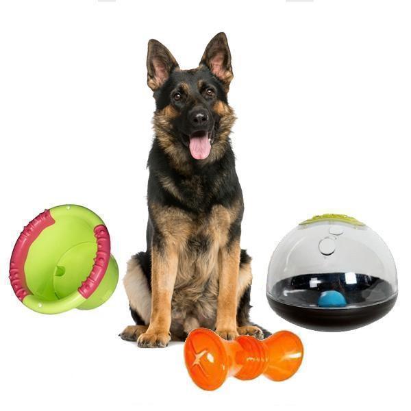 pet shop, mancare pentru animale, accesorii animale