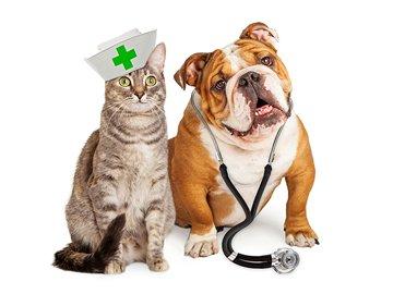 Farmacie veterinara, medicamente pentru animalute